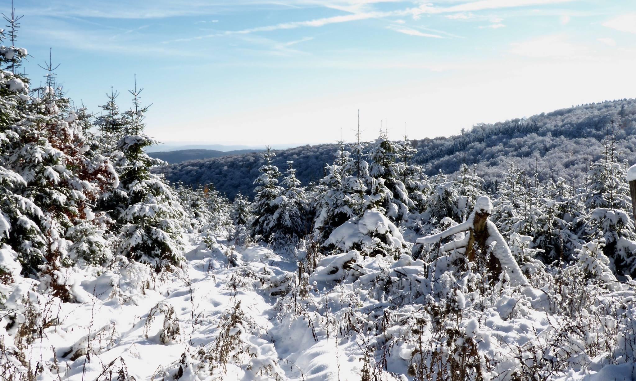 Sneeuw in Willingen